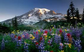 Landscapes Mountains Flowers Rainier Ultra 3840x2400 Hd Wallpaper ...