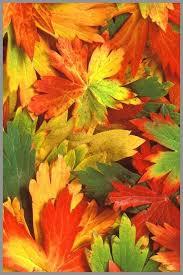 wallpaper elegant autumn leaf iphone 4