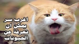 عبارات في حب القطط كلام عن القطط حنين الذكريات