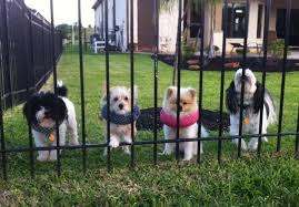 Puppy Bumpers Keep Dogs From Getting Through Fence And Balcony Rails Dogs Dog Proof Fence Puppies