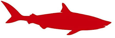Amazon Com Bullshark Fresh And Salt Water Shark Vinyl Decal For Outdoor Use On Cars Atv Boats Windows And More Red 6 Inch Kitchen Dining
