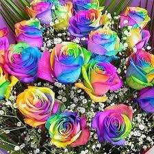 kit diy rainbow flowers