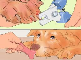 3 easy ways to file a dog s nails wikihow