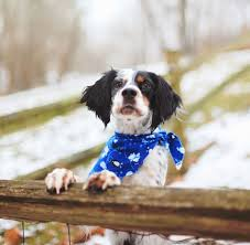 Things To Consider When Choosing A Fence For Your Dog