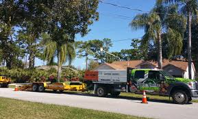 Palm Bay, FL Tree Trimming - Tree Service Express