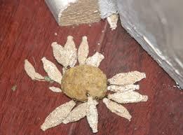 case bearing moth larvae eat