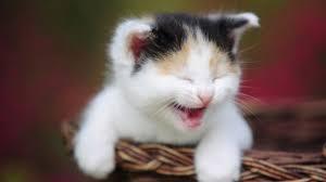 صورة قطة مضحكة
