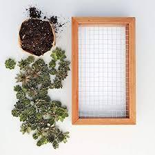 succulent gardens medium living picture