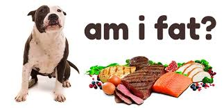 best dog food for pitbull puppies to
