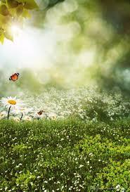 أطفال الربيع صور خلفيات زهور بيضاء العشب الأخضر البريق منقطة خوخه