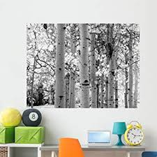 Amazon Com Wallmonkeys Black And White Image Of Aspen Trees Wall Decal Peel And Stick Graphic Wm329256 60 In W X 45 In H Home Kitchen