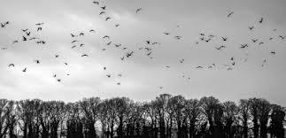 birds in the sky | Tumblr