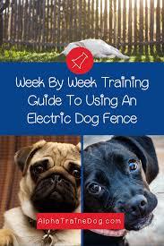 Training Your Dog Using A Petsafe Electric Dog Fence In 2020 Training Your Dog Dog Fence Dog Training Classes