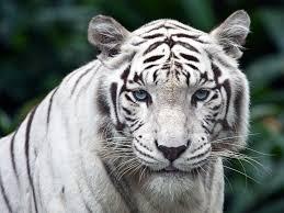 متقن الويب صور وخلفيات حيوانات جميلة بجودة عالية