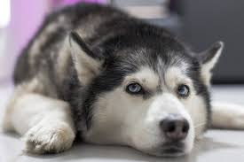 6 signs your dog is sick