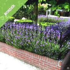 Buy Hedges Affordable Gardens4you Co Uk