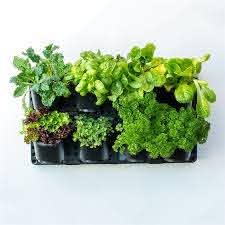 Holman Vertical Greenwall Garden Kit Bunnings Warehouse