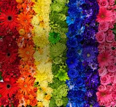 jetfreshflowers rainbow flowers shaded