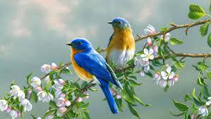 صور طيور وعصافير صور عصافير جميلة وطيور في الغابات والحدائق