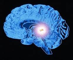 Pineal Gland - Third Eye | Healing Energy Tools
