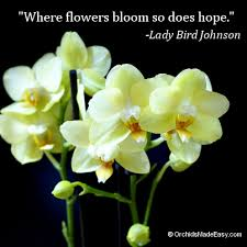 orchid quote flowers bloom hope com