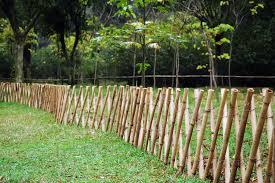 Bamboo Fence Google Search Bamboo Garden Diy Garden Fence Fence Design