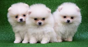 cute puppy names adorable ideas for