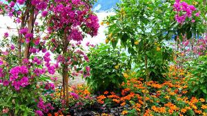 flower garden pictures free