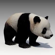 Giant Panda Animated 3D model realtime ...