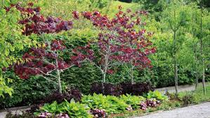 classic trees for modern gardens