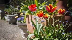 french inspired garden brings her joy
