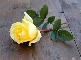 صور ورد أصفر رائعة وجديدة