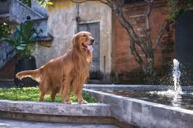 10 Amazing Backyard Design Ideas For Dogs The Dogington Post