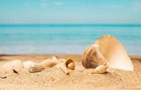 Wallpaper sand, sea, beach, summer, shell, summer, beach, sand, seashells  images for desktop, section природа - download