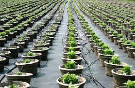 the urban underground farming solution