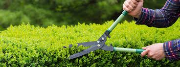 Garden renovations to help sell your home | Homeowners Guides | YBS