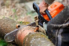 tree removal Baltimore county
