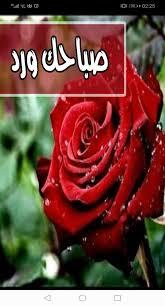 رسائل و صور صباح الورد و صباح الفل و الياسمين Pour Android