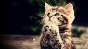 أحلى أسماء قطط بنات أجنبية 2020 قائمة جديدة محدثة موسوعة