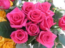 تحميل صور ورد اجمل الورود الطبيعيه المميز