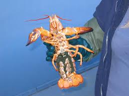 Huntsman Marine Science Centre: The ...
