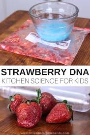 strawberry dna science activity for