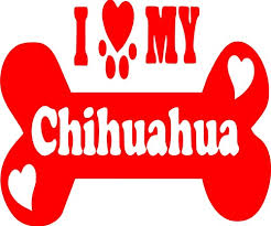 I Love My Chihuahua Vinyl Decal Car Window Laptop Stickers Duh Decals