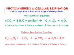 cellular respiration compare
