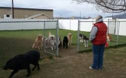 A Group Of Dogs Barking Furiously Through A Gate Prove They Re Not So Tough Once It Slides Open