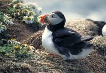 Grantees | The Puffin Foundation