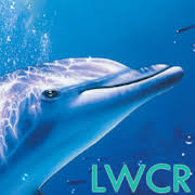 free dolphin live wallpaper for android