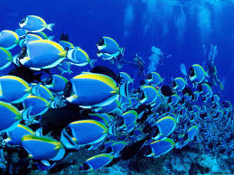 animated fish wallpapers top free