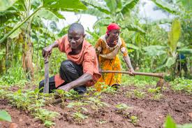 From drawings to reality: boosting agricultural production in Burundi