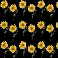 sunflower wallpaper background free